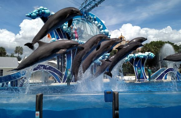 Orlando Area Attractions